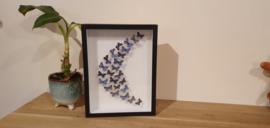 Schitterende set Purple Fantasy vlinders