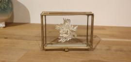Schitterend stukje koraal Reteporella Grimaldii