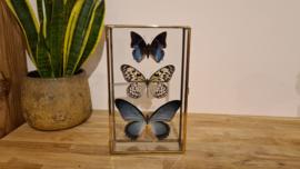 """Set vlinders """"Blue Natural"""""""