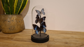 """Set of butterlies """"Touch of Blue"""""""