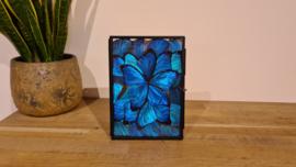 """Schitterende set vlindervleugels """"Bright Blue"""""""