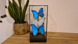 """Set vlinders """"Morpho's Display Small"""""""