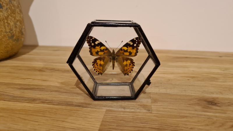 Schitterende vlinder Vanessa Cardui
