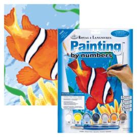 Junior - Clown fish