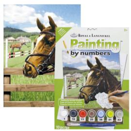 Junior - Equine paddock