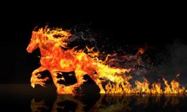 Fire horse - 40 x 60 cm