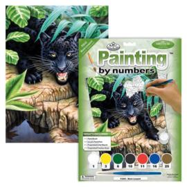 Junior - Black leopard