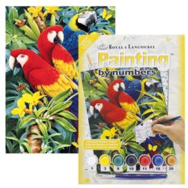 Junior - Macaws