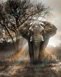 Magische olifant by George Veltchev - 40 x 50 cm