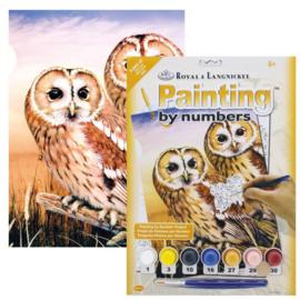 Junior - Tawny Owls