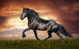 Zwart paard - 40 x 60 cm