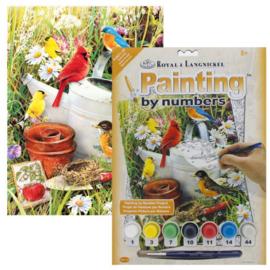 Junior - Garden Birds