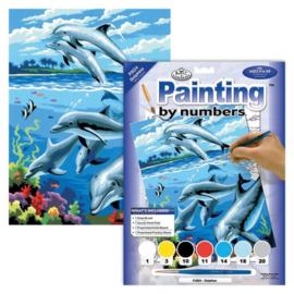 Junior - Dolphins