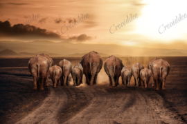 Olifanten langs achteren - 40 x 60 cm