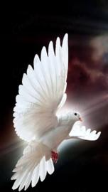 Witte duif - 40 x 60 cm