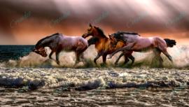Paarden in de zee - 40 x 60 cm