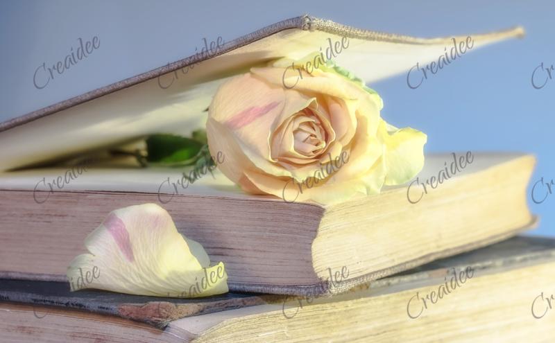 Roos in een boek