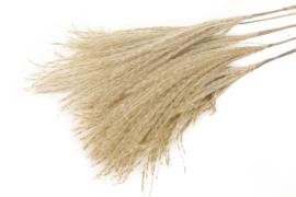 Bunch Fluffy silver grass 75cm, 10 takken