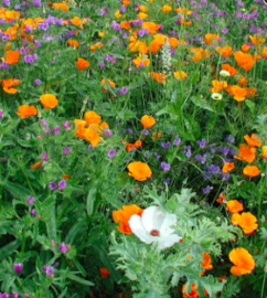 Bloemenmengsel, middelhoog