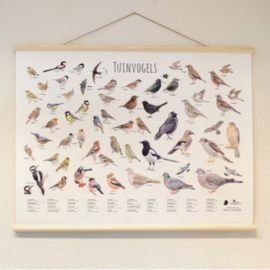Schoolposter Tuinvogels