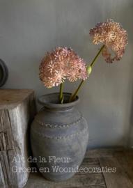 Allium Gigantheum 68 cm