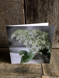 Mooie dubbele kaart hortensia