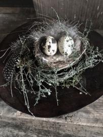 Mini nestje met tijm 10 a 12 cm