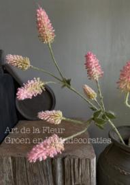 Trifolium Roze   80 cm