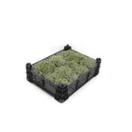 Kistje Zilvermos