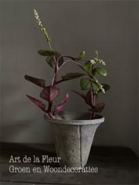 Karmozijnbes plant excl plant
