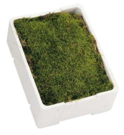 Kistje platmos  mooi groen