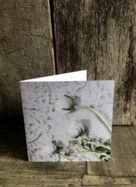 Mooie dubbele kaart witte ranonkel bloem