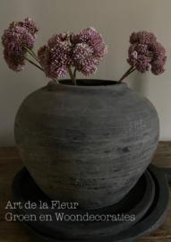 Oud roze kunst sedum