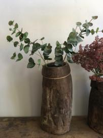 Mooie tak eucalyptus middel