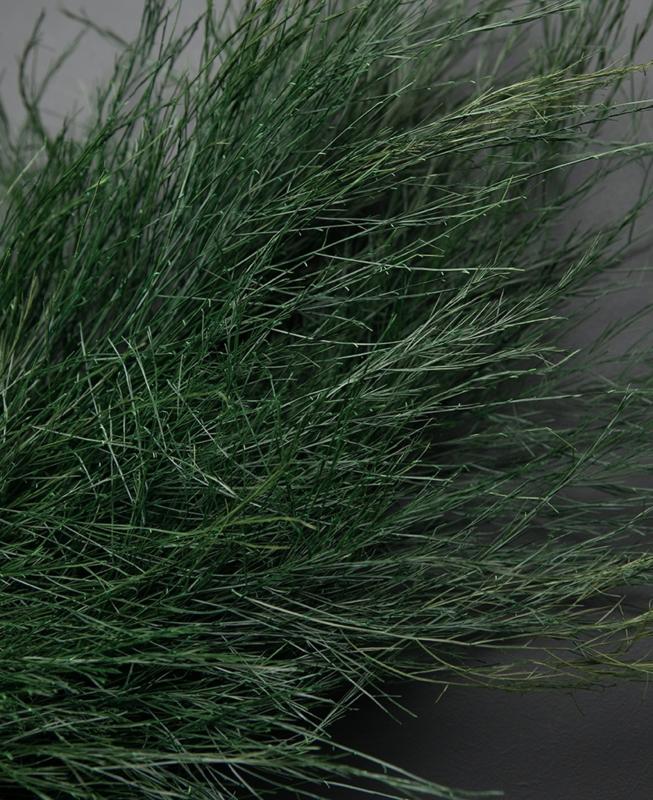 Treefern Asparagus bosje van 5 takken