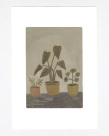 Gemma Koomen 'Houseplants' A4 Print