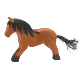 Ostheimer koud bloed paard