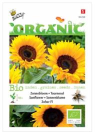 Organic Helianthus, Zonnebloem Zohar F1 (BIO)