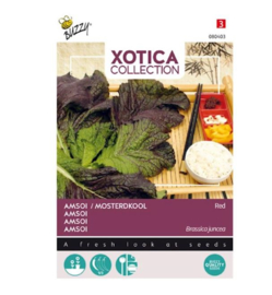 Bijzondere groente Rode Amsoi of Mosterdkool