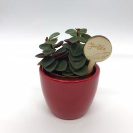 Houten plantenprikker