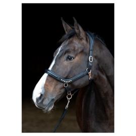Harry's Horse halster leder Rosegold anatomic