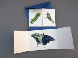 Vlinderverhaal