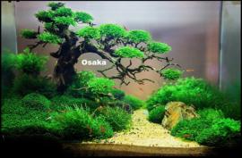 Bonsai Tree 15cm - aquascaping boom