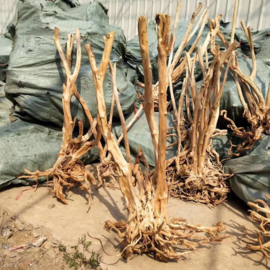Boutique stump 85-100cm