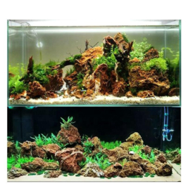 Maple Leaf stone 10-20cm - aquarium decoratie stenen