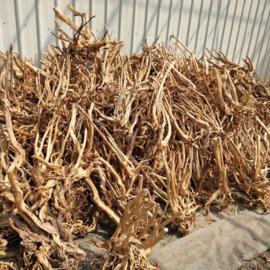 Boutique stump 70-85cm