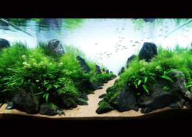 Landscape stone 10-15cm - aquarium decoratie stenen