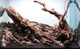 Golden wood 30-40cm