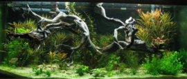 Spider wood 50-65cm