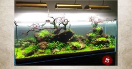 Jiang Jing stone 10-20cm - aquarium decoratie stenen